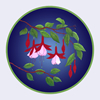 Red and White Fuchsias