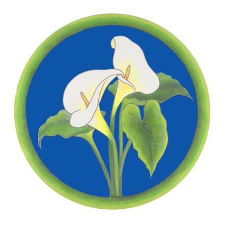 NKD-P1002-Calla-Lilies